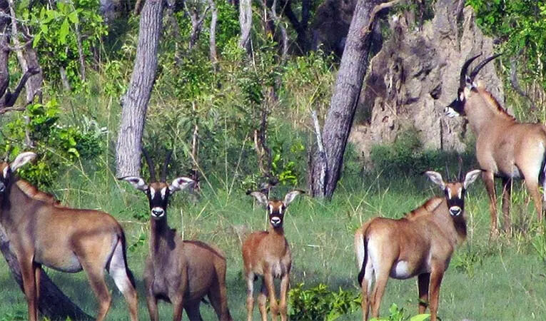 Environnement :  Bilan des activités de gestion du parc National de Taï